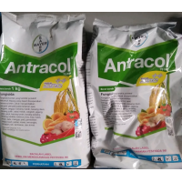 Fungisida Antracol 70wp 1 Kg