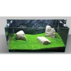 Bibit Benih Tanaman Air Carpet Seed Aquascape Aquarium