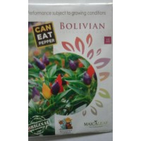 Cabe Hias Bolivian Rainbow Exotic Pepper Maicaleaf 15s