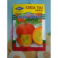 Labu Mini GOLDEN MAMA 35