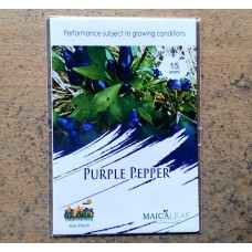 Cabe Hias Purple Pepper Maicaleaf 15s