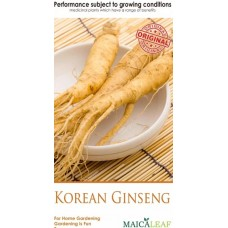 Bibit Ginseng Maica Leaf Korean Ginseng Original 10s