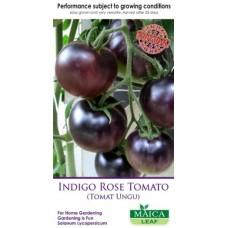 Indigo Rose Tomato Maicaleaf 20s