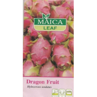 Benih Buah Naga Maica Leaf Dragon Fruit 25s