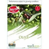 Olive Zaitun Maicaleaf 5s