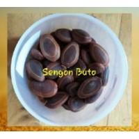 Sengon Buto (Enterolobium cyclocarpum)