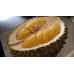 Bibit Durian Musang King 40 cm