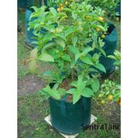 Planter Bag 50 Liter
