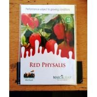 Ciplukan Merah Maicaleaf Red Physalis 15s