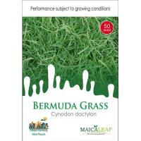 Bibit Rumput Bermuda Rumput Golf Maica Leaf 50s