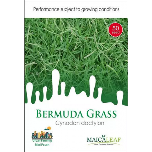 Bibit Rumput Bermuda Rumput Golf Maica Leaf 50s ...