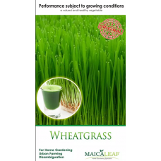 Bibit Wheatgrass (rumput gandum) Maica Leaf 50s
